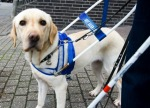 blind-hond